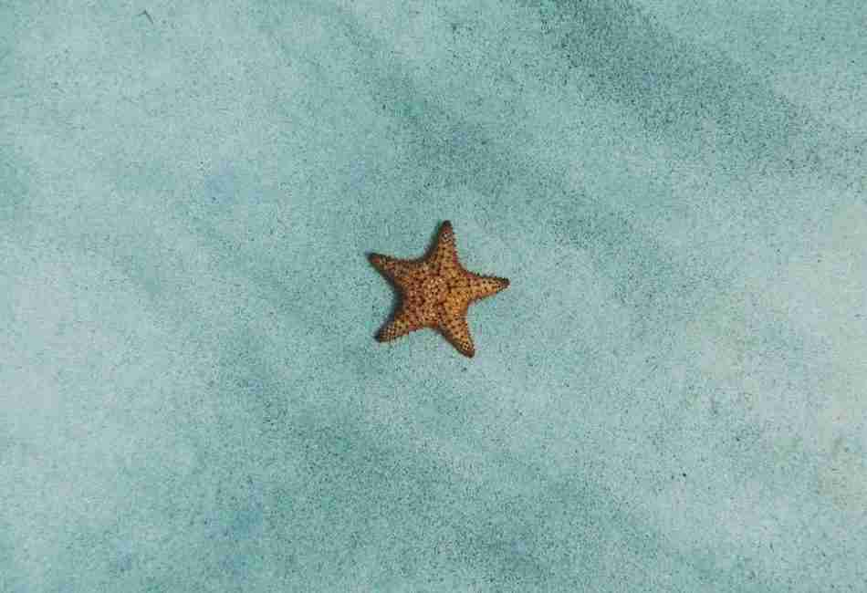 Starfish lying in blue sand